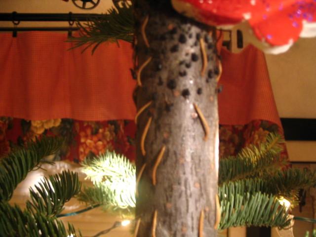 Strange black bugs found on Christmas tree | Adopt-A-Bug