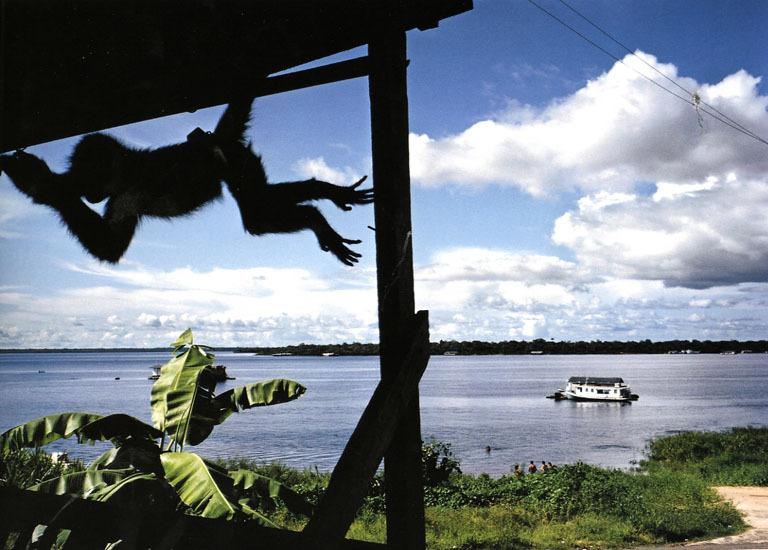 tefe-brazil-1993.jpg