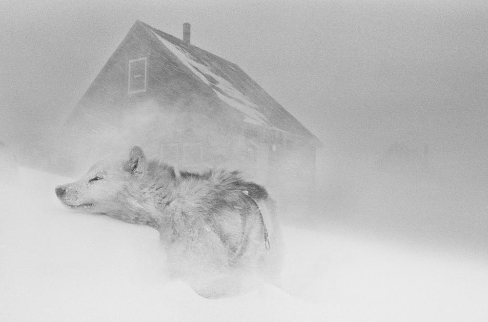 Foto: Ragnar Axelsson