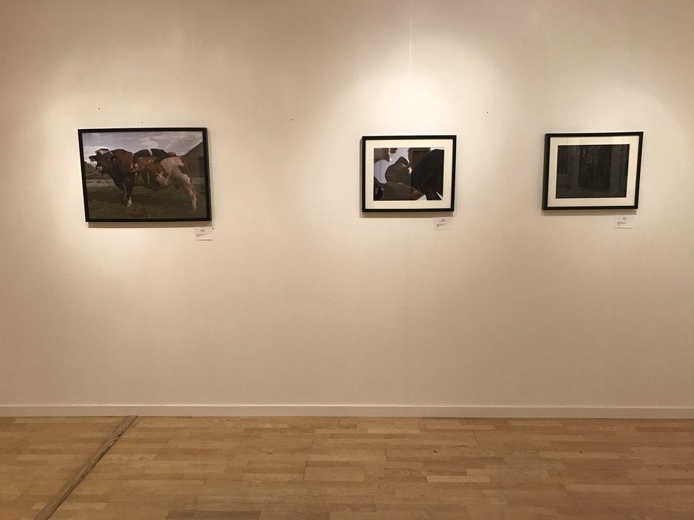 Part of Anna Adamo's exhibition
