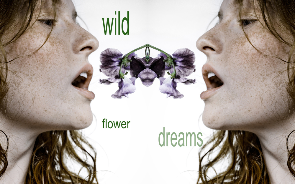 wildflower dreams.jpg