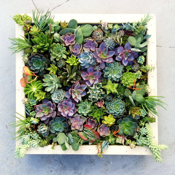 3.  Plan Your Living Wall    Start planning your Spring garden.  There are many plants that you can begin indoors, as well as various options that can remain inside year around. (for the urban dweller).  I am really excited to start my living wall - vital art that enhances any space.  The simplest living wall is a succulent wall garden.   To create this, you will need a frame, potting soil and succulent clippings. (You can purchase a preassembled frame from a home supply store, or you can create one yourself). Creating one yourself will require a picture frame, a wooden shadow box, planting fabric and potting soil.  After you add your potting soil to your planter, make sure that the wire is accessible. The wire is what will secure the plants in place. To plant the succulents, poke the ends through the wire and push them into the soil. After arranging the plants, let the frame lay flat in a sunny location so that they can take root. This will take anywhere from about 4 to 10 weeks. Once the plants take root, the garden is ready to be displayed on a wall.   Overwhelmed with where to start?  Buy yourself a  starter kit . *The instruction kit above was sourced from  livingwallart.com .