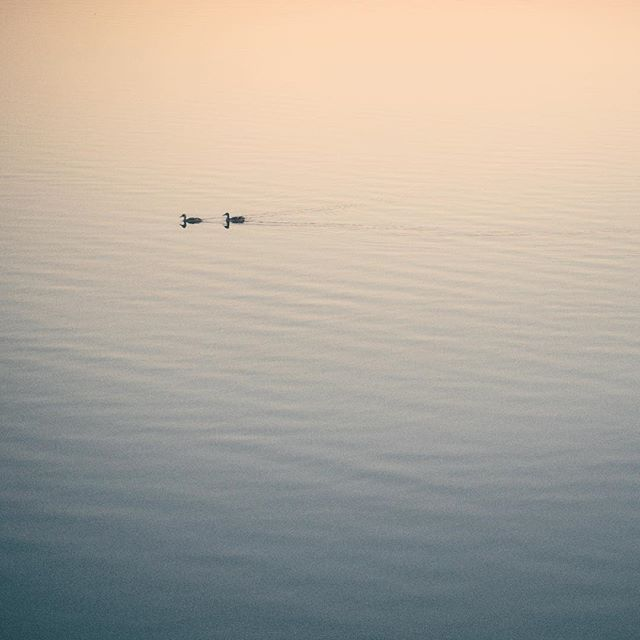 Get your ducks in a row. . . . . . #gradientnation #simplicity #minimalha #minimalism #rsa_minimal #vsco #minimalist #Leica #90summicron #midwestsunset
