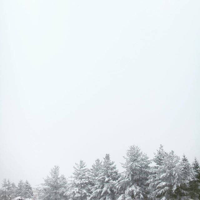 I don't like pine trees unless they are covered in snow. . . . . #minimalism #simplicityeverywhere #vsco #rsa_minimal #tuftedandgoldweddings #snow #snowday #fog #minimalist #pinetrees