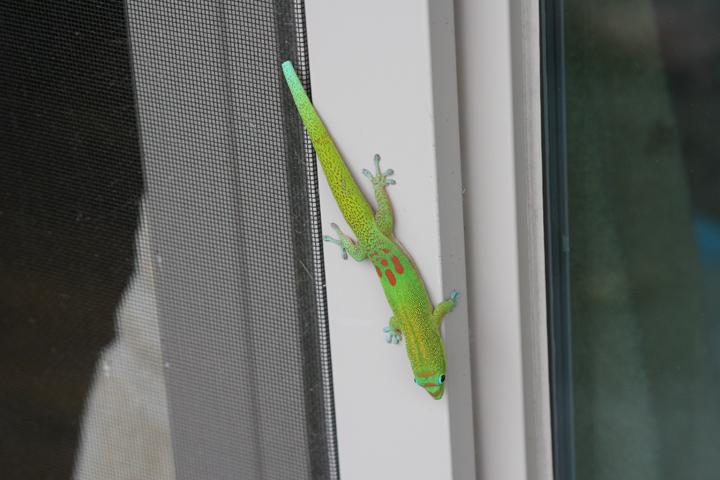 12_Gecko.JPG