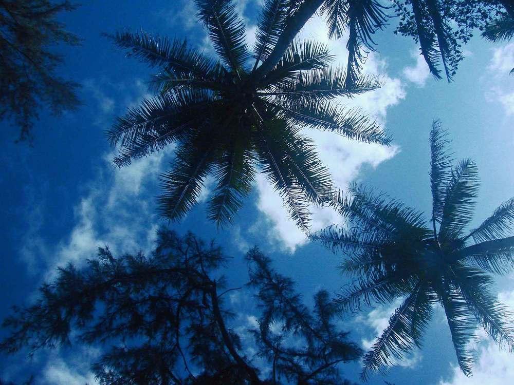 Kehena Palms