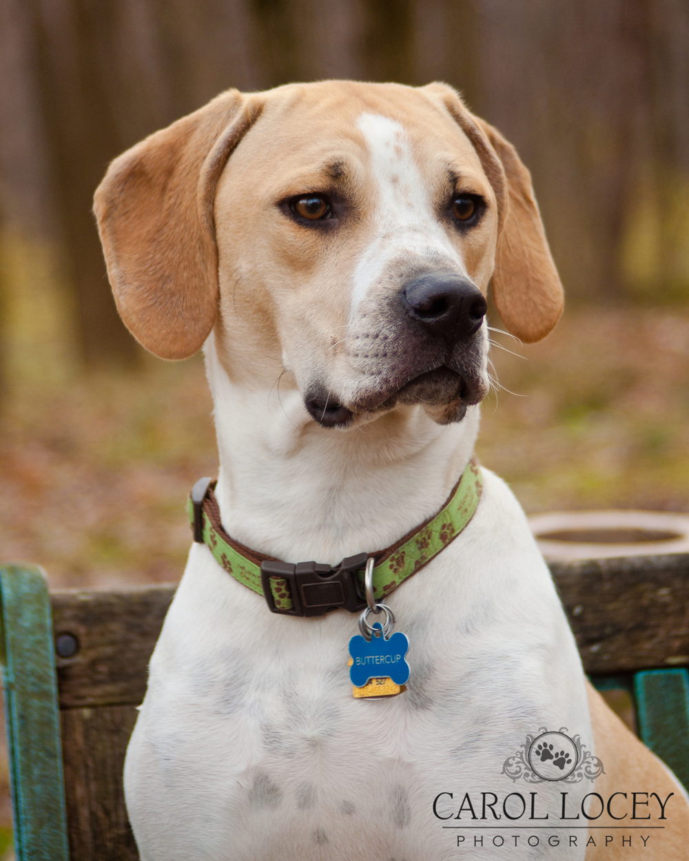 Carol_Locey_Photography_dog_portraits.jpg