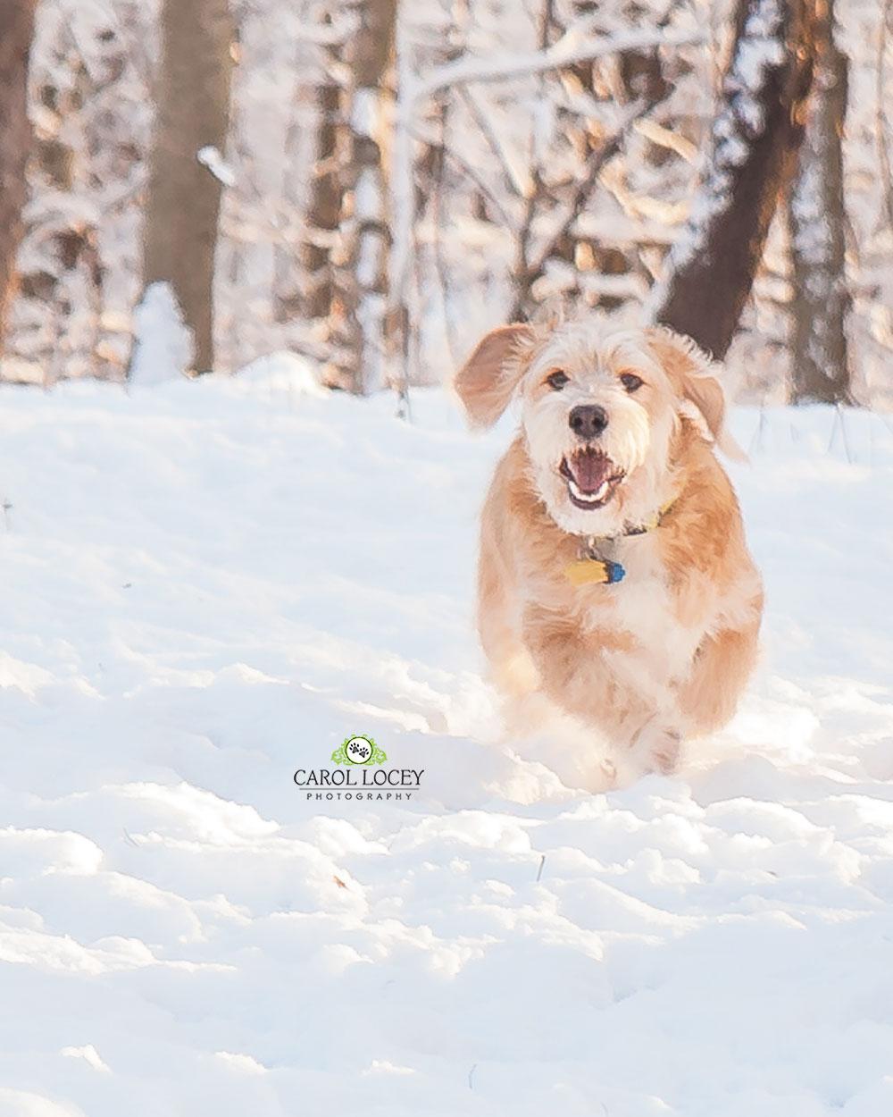 CarolLoceyPhotography_52_Project_Joy_Pet_photography.jpg