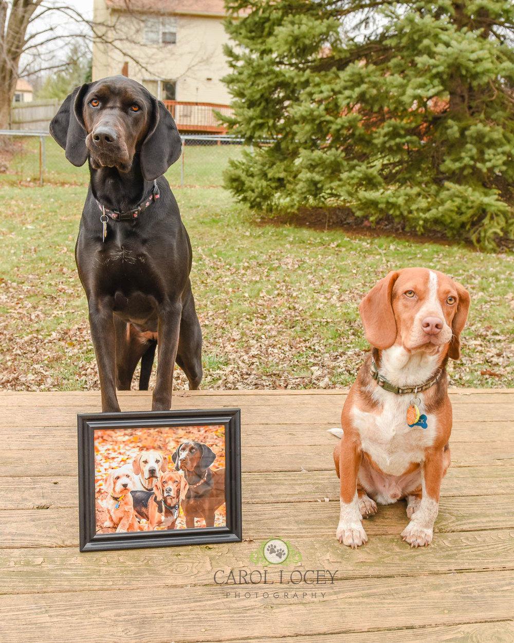 Dogfamilyphoto
