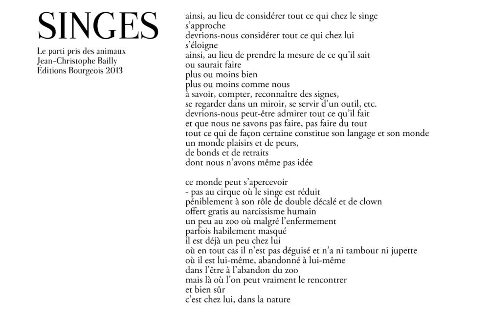 singe-2.png