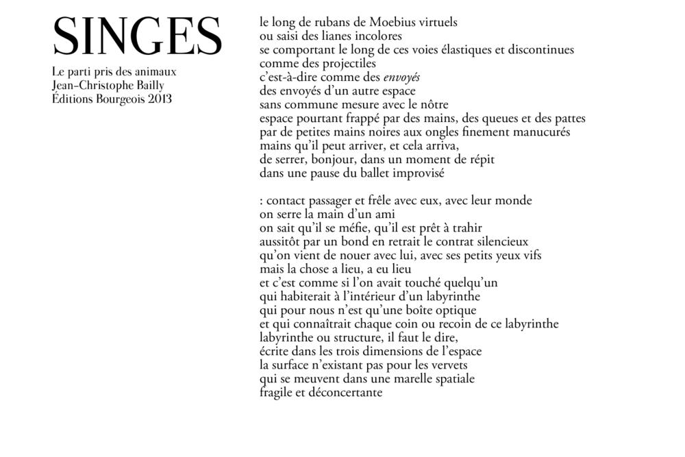 singe-4.png