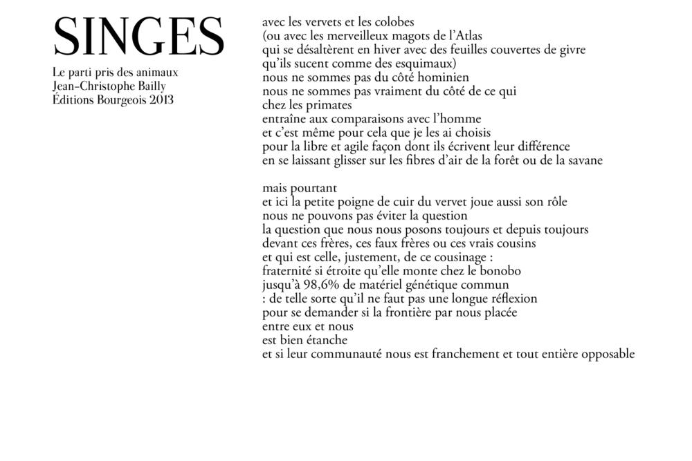 singe-6.png