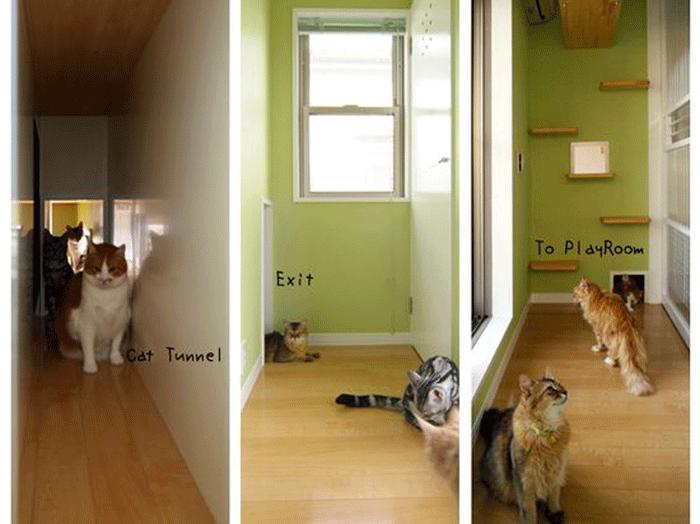 cat5.png