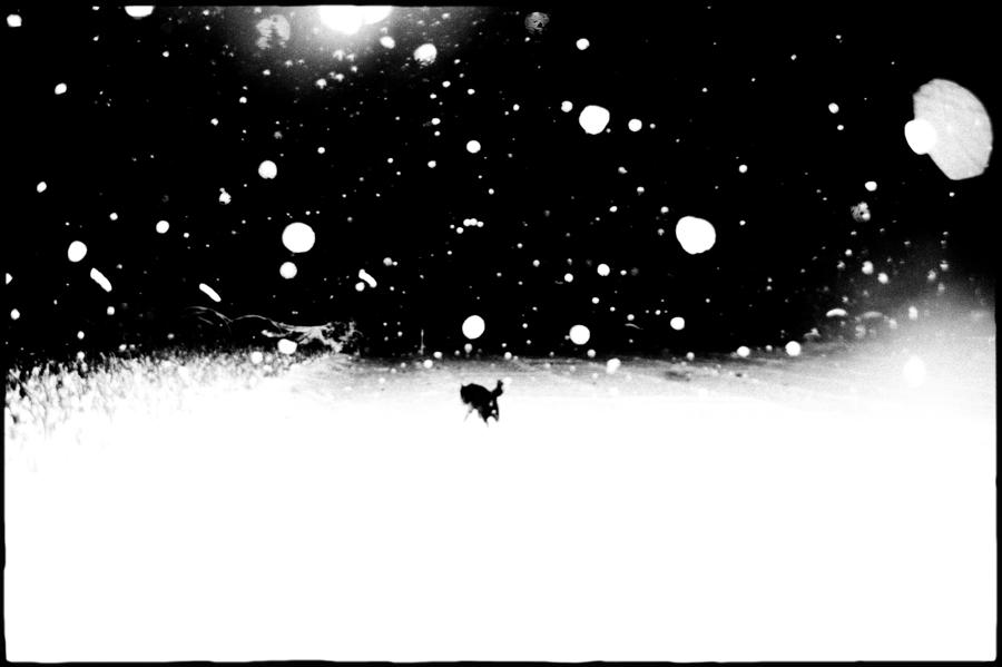 """©Hajime Kimura , Japon, né en 1982     Man and Dog  Selon le Ministère de la Santé du Japon, le cancer constitue depuis 1981 la première cause de mortalité du pays avec plus de 300 000 décès par an. On estime à un homme sur deux et une femme sur trois, les personnes risquant d'en développer un.   """"Je m'inquiète juste pour mon chien."""" , prononce l'homme atteint d'un"""
