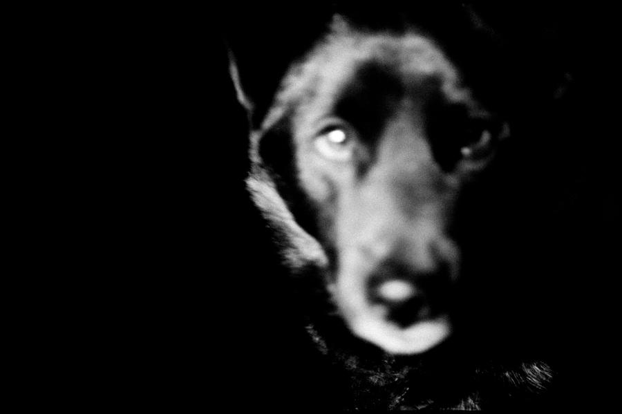 ©Hajime Kimura , Man and Dog