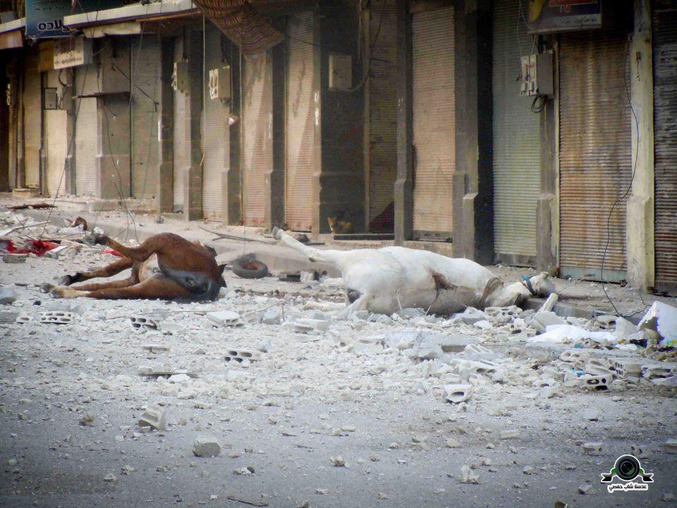 حتى الحيوانات لم تسلم من بطشهم . شارع أبو العوف , 27/4/2012 A35     Alaof, 27/4/2012
