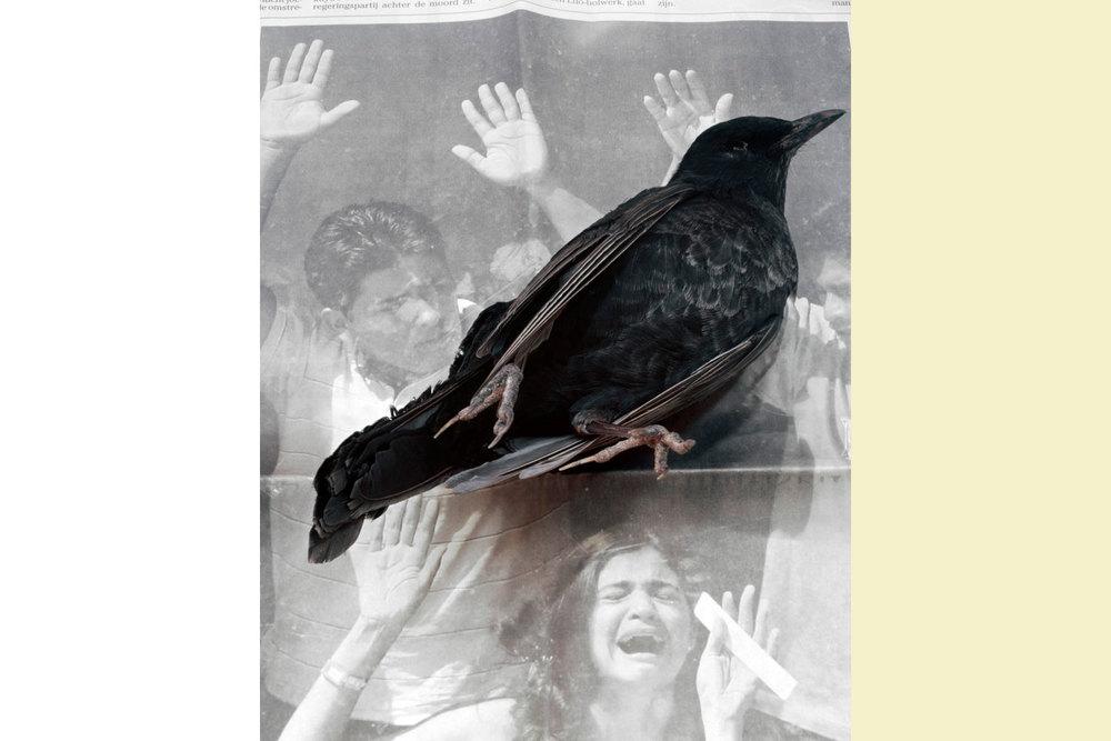 geert goiris2008-DEAD-BIRD-817x1024.jpg