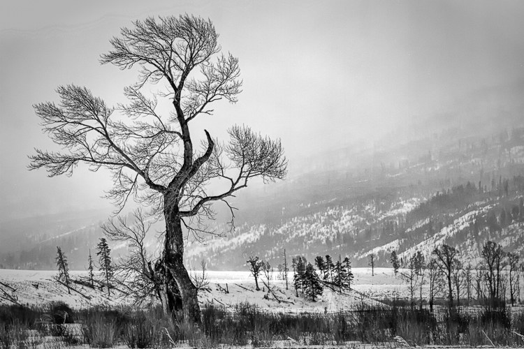 Yellowstone B&W