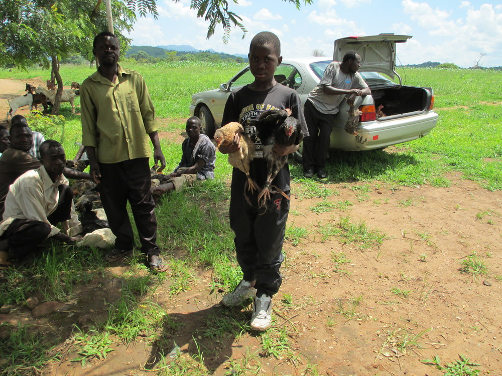 At the Grace Center, one of our children receiving their chickens! I love looking around and seeing chickens and goats everywhere, including the trunk of the car!