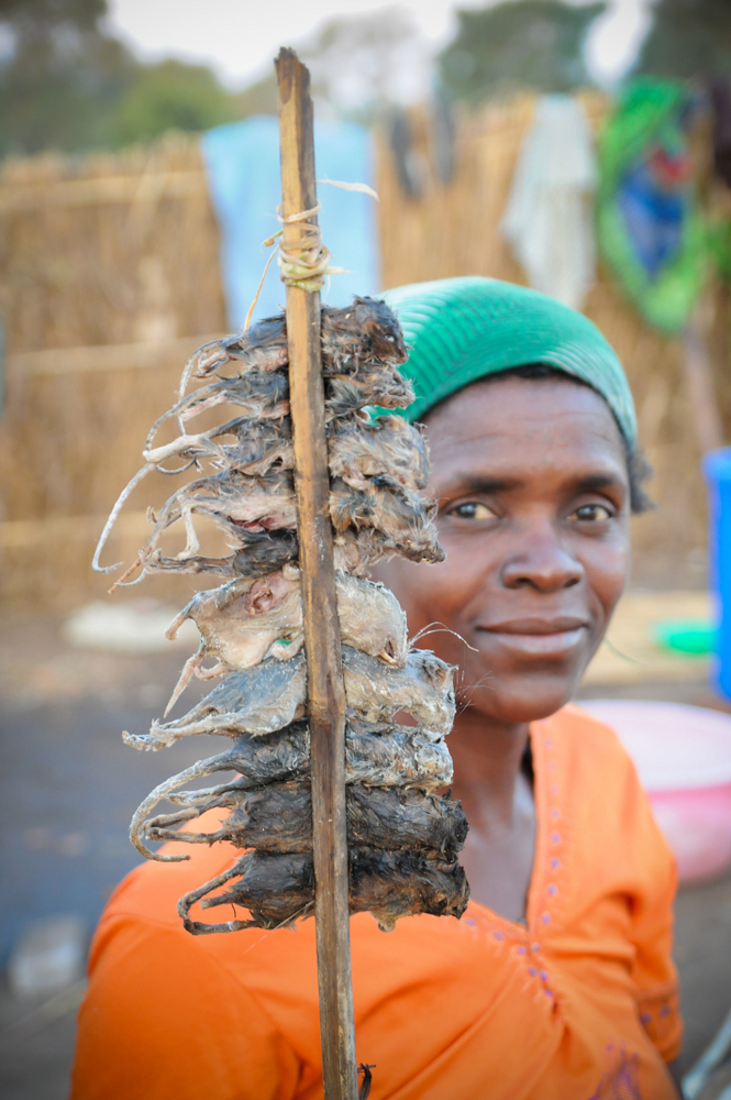 Mice is a delicacy cherished by Malawians, Children and adults hunt mice then boil, smoke or fry them up!