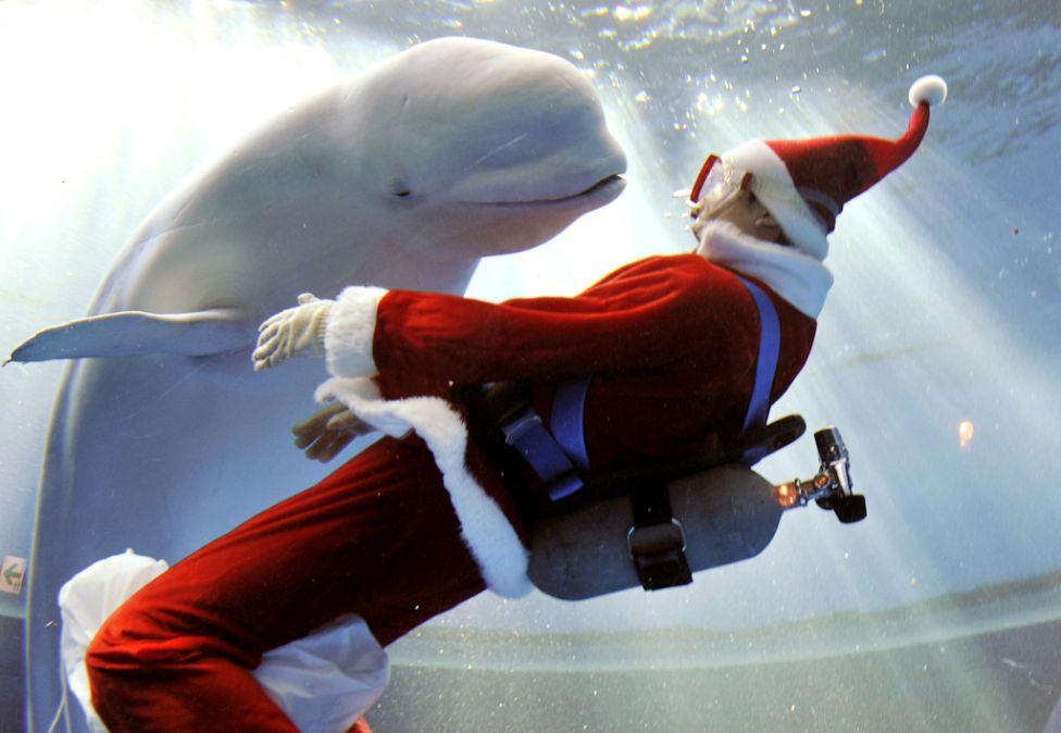 Underwater Christmas? c.k