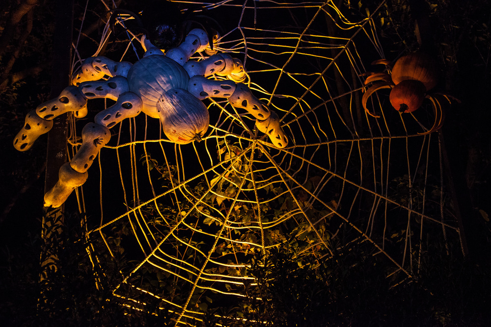 Spider Pumpkin again later at night