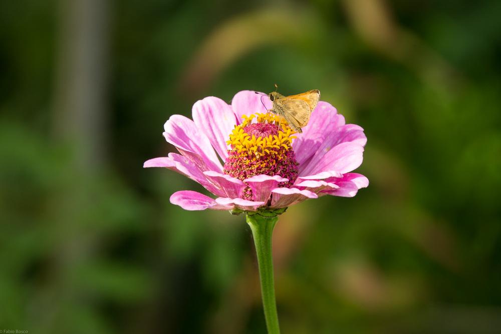 FabioBoscoPhotography_Resting Flower-097370.jpg