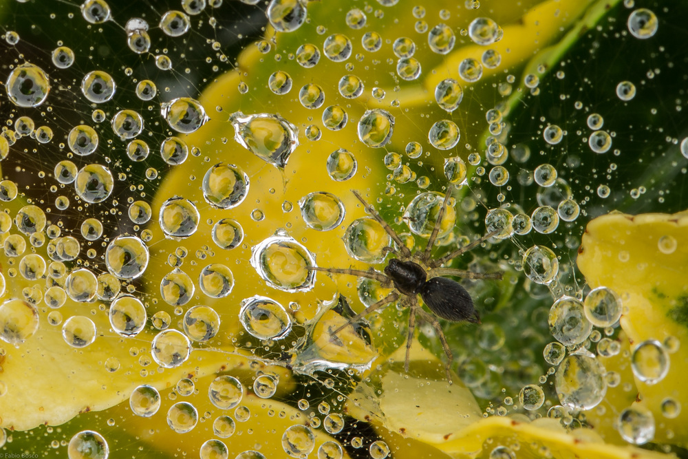 FabioBoscoPhotography_Spider web after the rain 2-109528.jpg