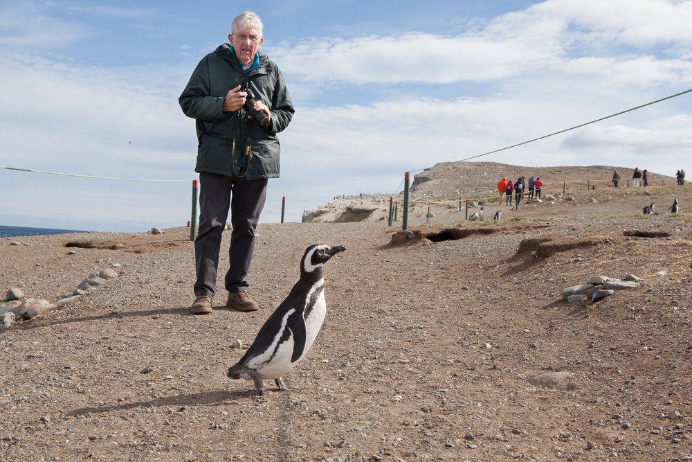 A Magellanic penguin passes in front of a tourist on Magdalena Island in the Strait of Magellan, Chile.