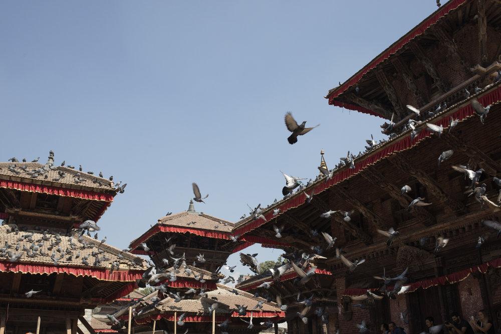Pigeons in Durbar Square.