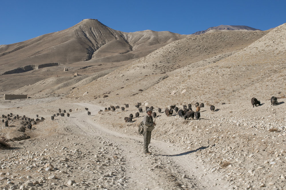 A goat herder on the way to Chosar Valley.