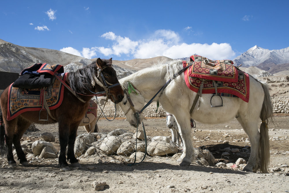 Many people still rely on small mountain ponies as a mode of transportation along the newly created roads.  For many years before the roads were created people were limited to horseback and foot travel to navigate the region.