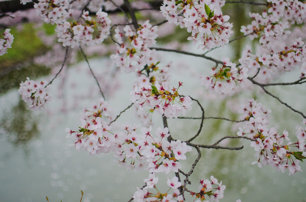 japanblog-33.jpg