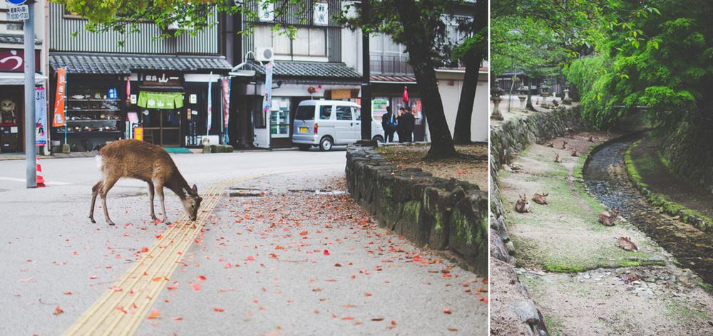 japanblog-54.jpg
