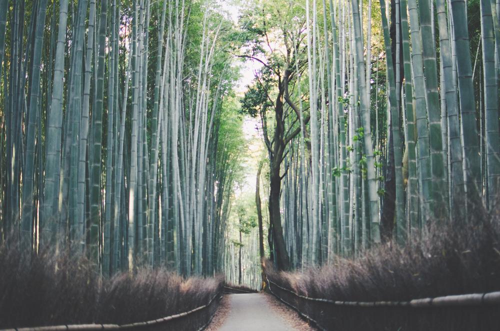 japanblog-58.jpg