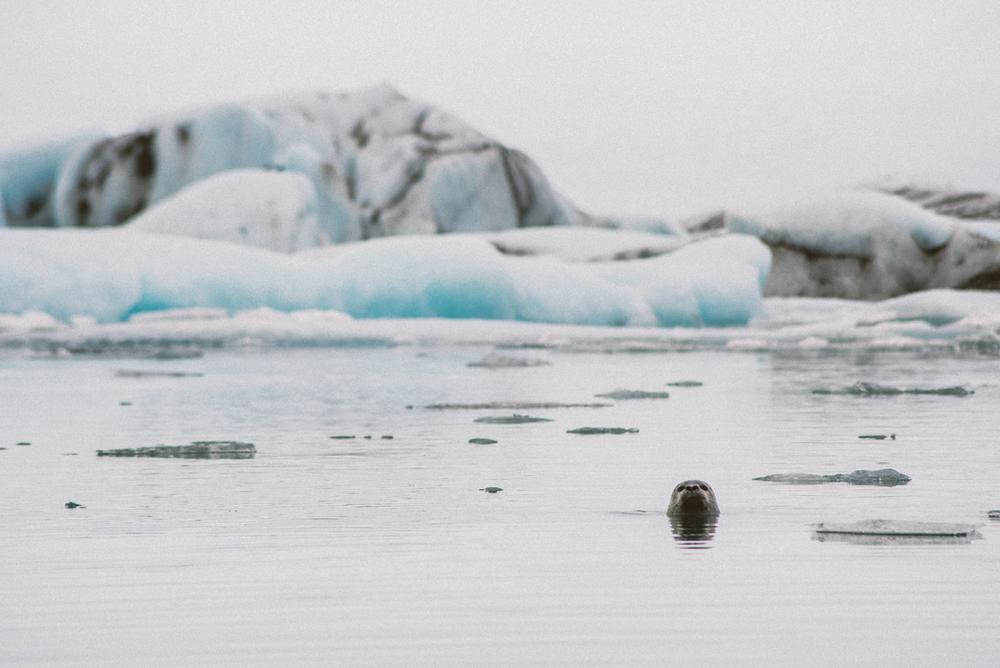icelandblog-119.jpg