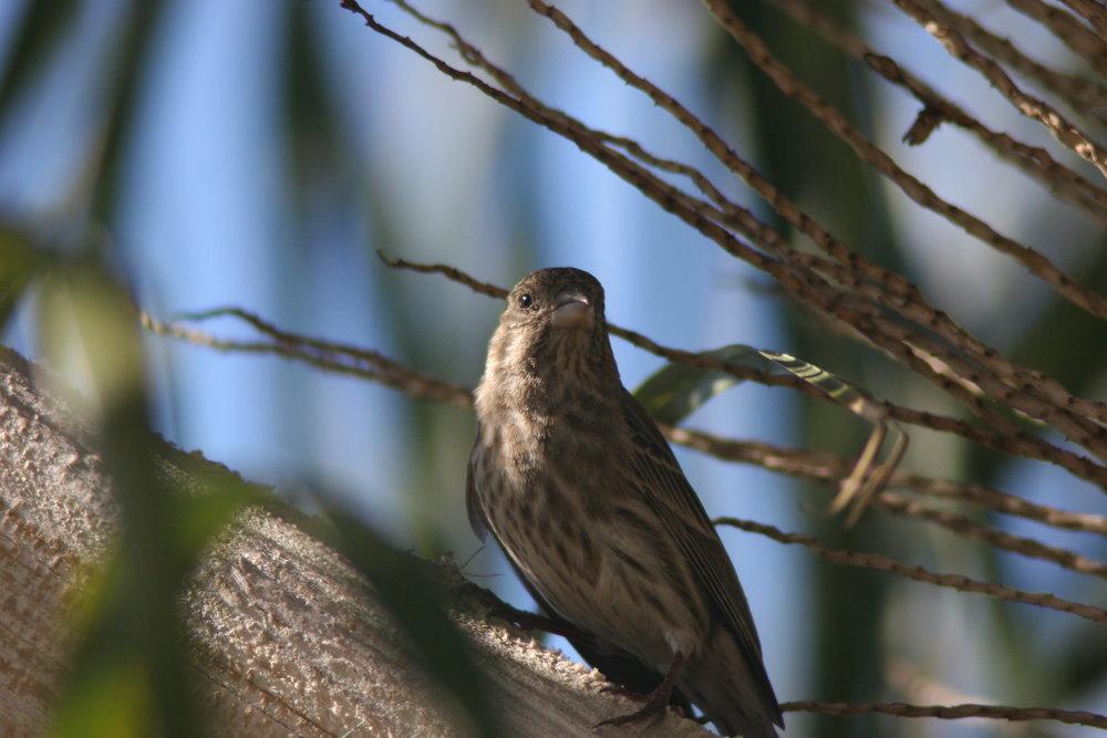 Bird 025.JPG