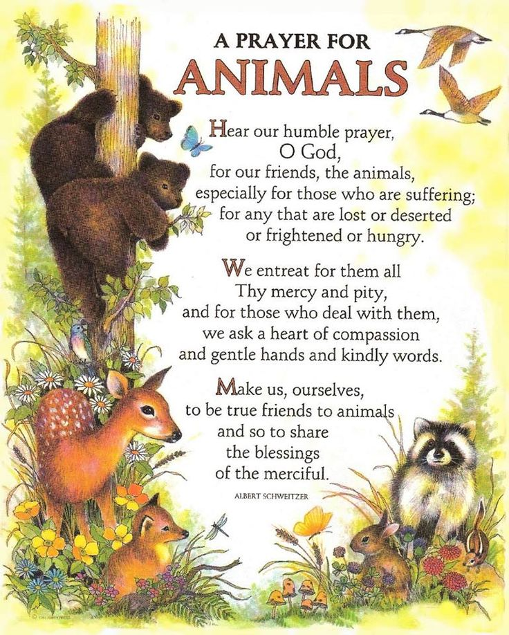 prayerforanimals.jpg