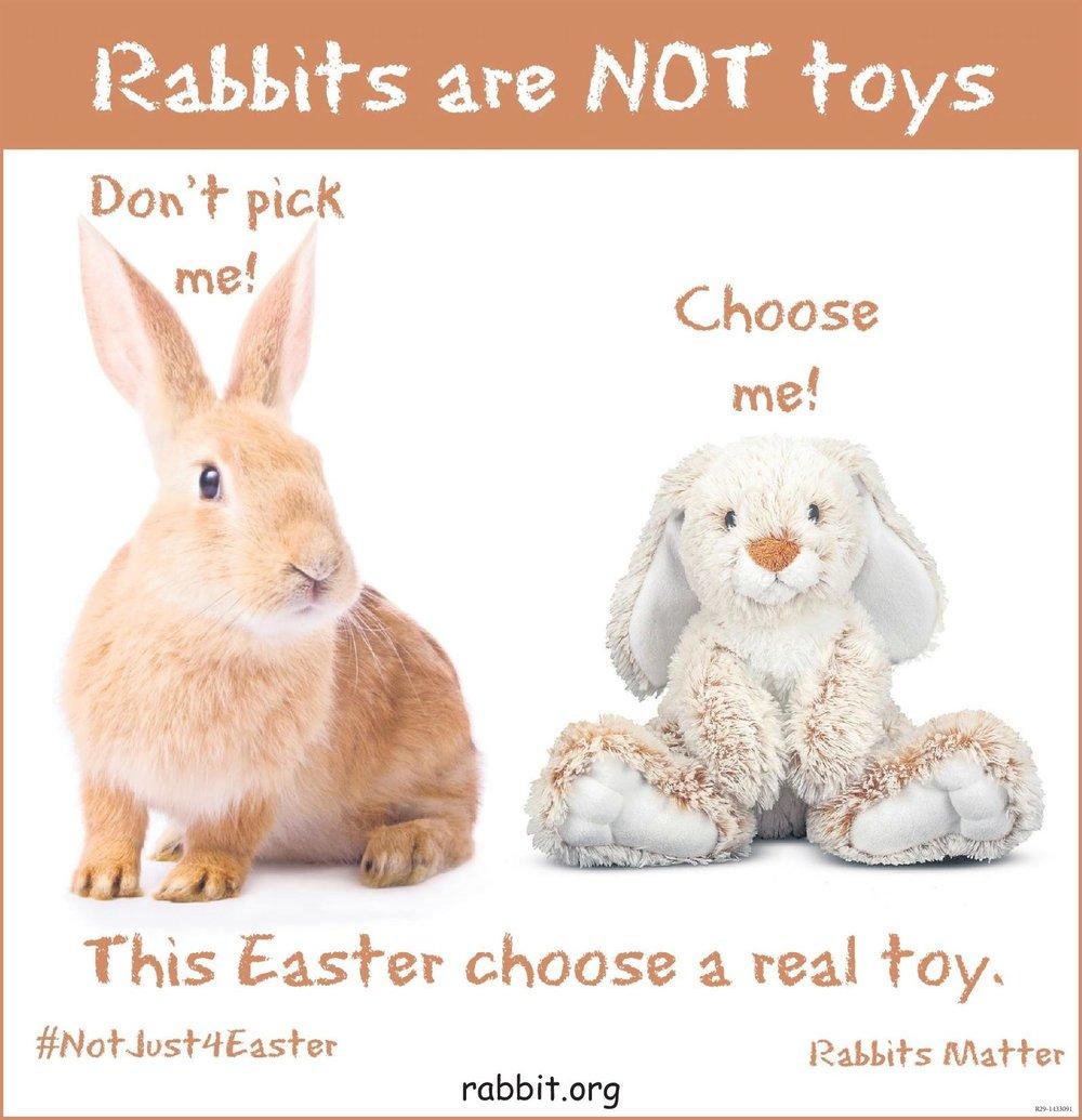 Photos courtesy of the    House Rabbit Society