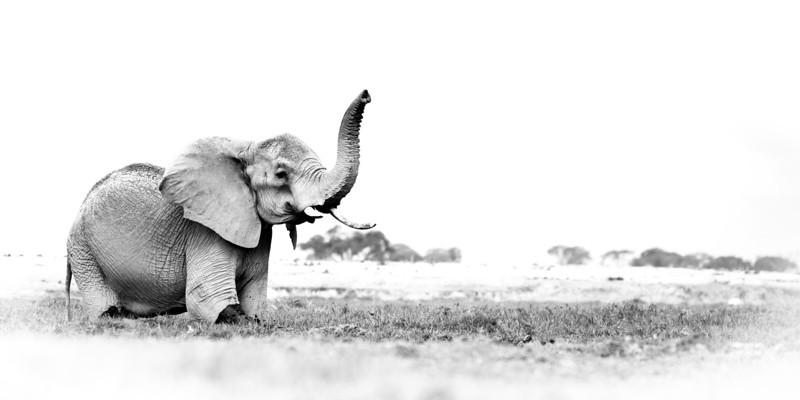 Muench Workshops Ngorongoro Elephant.jpg