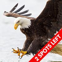 Alaska Wildlife & Landscapes April 2015