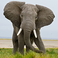 Botswana Photo Safari October 2015
