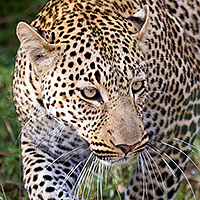 tanzania photographic safari february 2016