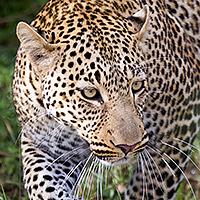 tanzania photographic safari february 2016