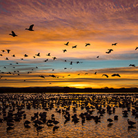 Bosque del apache december 2015