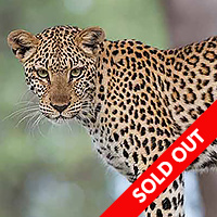 African Safari - Botswana October 2015