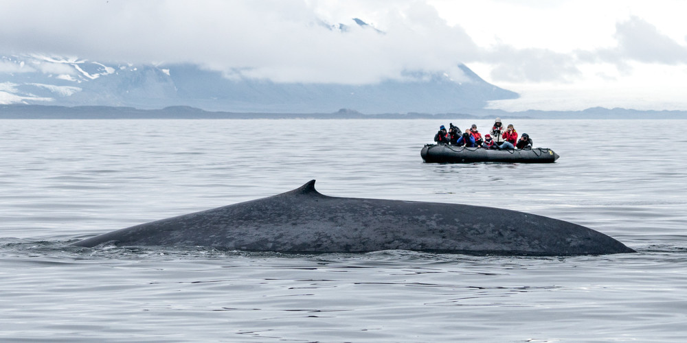 muench-workshop-svalbard-blue-whale.jpg