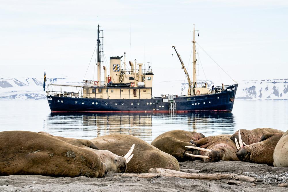 muench-workshops-svalbard-walrus-malmo.jpg