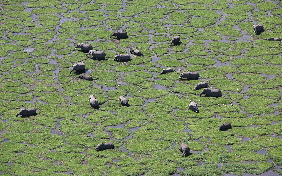 amboseli-helicopter-aerial.jpg