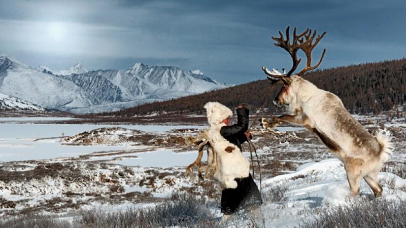bull-reindeer.jpg